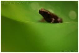 BAby frog on LEAF