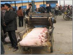 pork market - Daniel Zhao