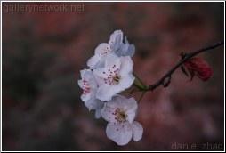 flower - Daniel Zhao