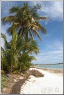 tropical palmtrees