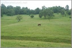 grassland - Daniel Zhao