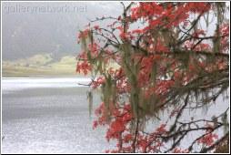 Tree Wiskers