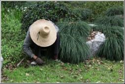 chinese gardener