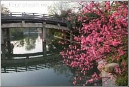 hangzhou pink flowers