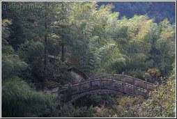 bridge in bamboo