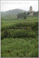 corn stalks pagoda