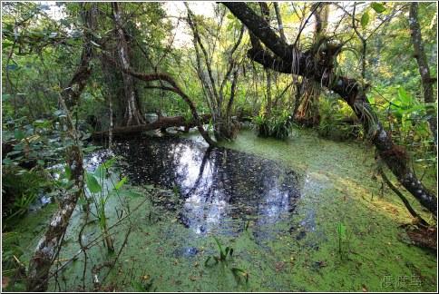 black swamp water