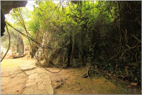 jungle roots