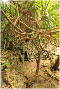 dense vines