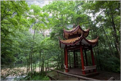 china forest pagoda
