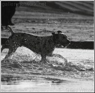 Dog splash