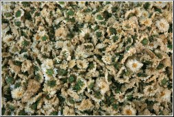 Dried Chrysanthemum