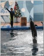 copy me dolphin