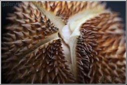 durian quarters