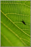 leafy fly business