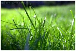grassy grass