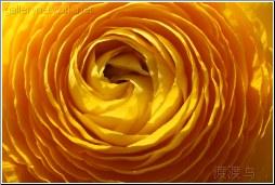 yellow flower petal circle