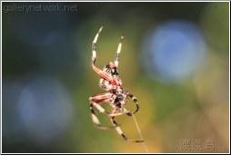 swampy spider