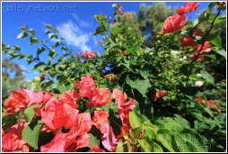 florida tropical flowers