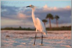 heron bird on beach