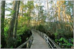 swampy greens