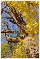 twisty yellow