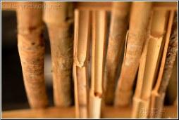 bamboo cut