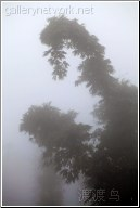 mountain bamboo mist