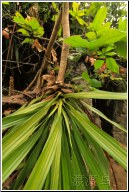 upsidedown leafs
