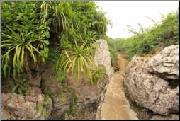 stone forest walkway - 渡渡鸟 .