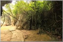 jungle roots - 渡渡鸟 .