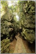 stone walkway - 渡渡鸟 .
