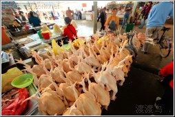 chickens for sale - 渡渡鸟 .