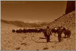 Caravan Himalayas