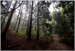 china lushan forest - C K