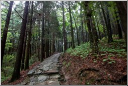 china lushan forest