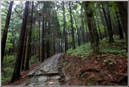 china lushan forest - C K