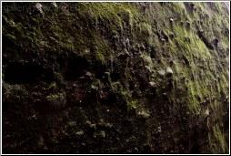 moss rocks texture