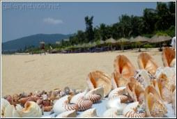 sand sea shells