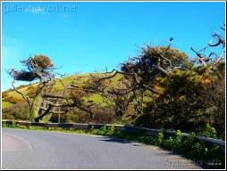 Cornish Road_2