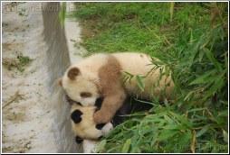 熊猫 - Daniel Zhao